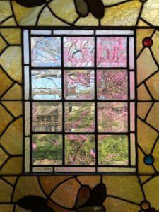 Redbud through stained glass